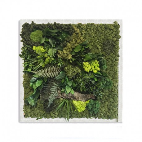 Picture Frame Pialla Lichen with leaves